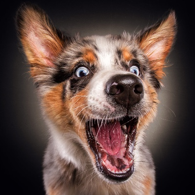A dog ready to catch a treat.
